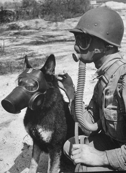 thevirussickness:   Soldier and German Shepard Wearing Gas Masks for Chemical Warfare Maneuvers.