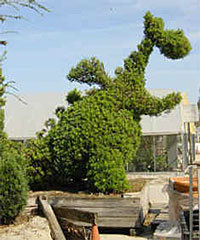 I FOUND IT! This picture of the old Pete's Dragon topiary (the largest topiary in WDW at one point) PROVES that it existed outside my imagination! (via Mediocrity: Topiary)