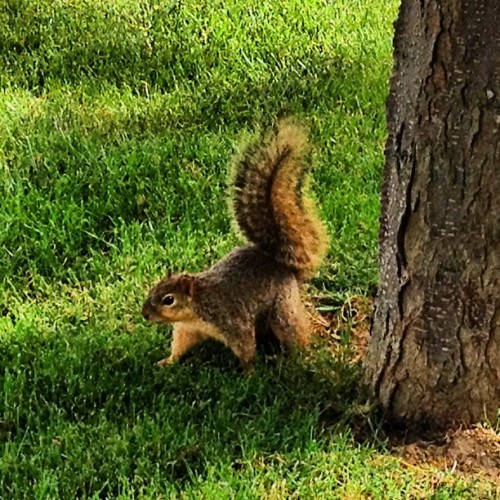 Mr. Squirrel   (Taken with instagram)