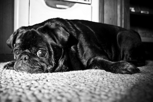 Tyson Relaxing in Front of the Heater on Flickr.