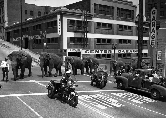 collective-history:  Elephants from Cole Brothers Circus parade through downtown Los Angeles, 1953
