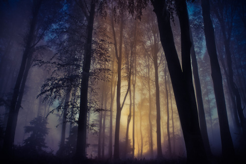 unknownskywalker:  There Is A Light That Never Goes Out by Jasna Bužimkić