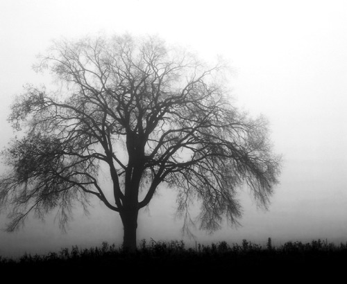 Tree of the gloom, o'erhanging the tomb,  Thou seem'st to love the churchyard sod;    Thou ever art found on the charnel ground,      Where the laughing and happy have rarely trod.        When thy branches trail to the wintry gale,          Thy wailing is sad to the hearts of men;            When the world is bright in a summer's light,              'Tis only the wretched that love thee then.                The golden moth and the shining bee                  Will seldom rest on the Willow-tree.      - Eliza Cook