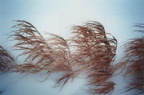 ailia:  untitled by Filippova T on Flickr.