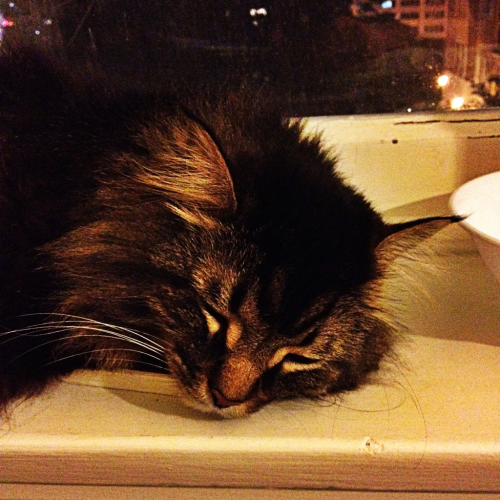 Window sill is a good place to sleep even at night, Harry says.