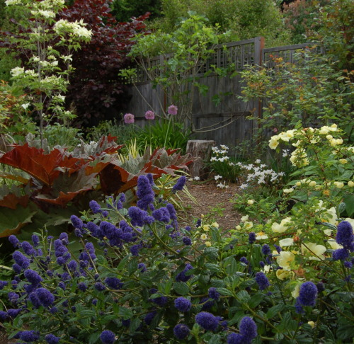 Leaf Readers Design Outside! via Native Root Designs A narrow border garden (15 ft.). This photo includes three native sp. cultivars, two edibles plants, a garden trail and a whole lot of flowers!