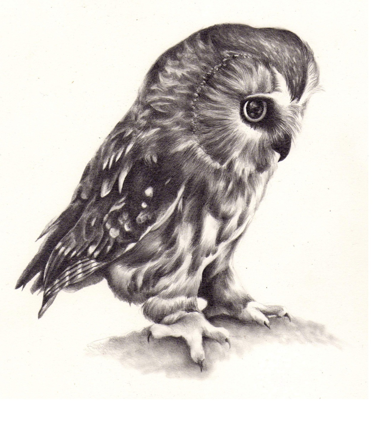 wryer:  I drew an owl I'm getting a load of drawings together to put up for sale in a shop in the foreseeable future and I figured generic wildlife drawings will sell, so I'll be doing a few more like this soon