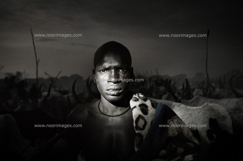 South Sudan. 23 March 2011. A young Dinka herdsman watches over his herd. The raids between different clans and tribes are very frequent and herdsmen are often armed with Kalashnikovs. ph. Francesco Zizola(via Noor)