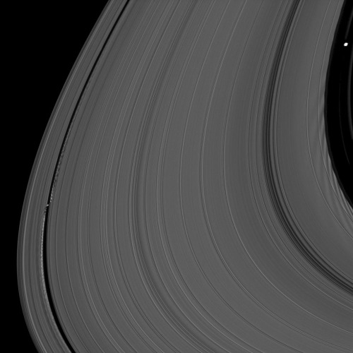 fyeahuniverse:  Making Waves  Daphnis and Pan, two of Saturn's moons affect the serenity of the rings, causing ripples and waves. Dapnis is seen in the lower left and Pan in the top right.  (Image credit: NASA/JPL-Caltech/Space Science Institute)