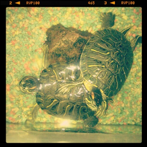 I like turtles..  (Tomada con instagram)