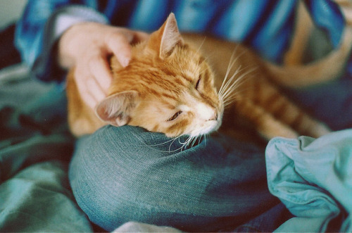 foxilate:  Pumpkin on Film by Simply Stardust on Flickr.