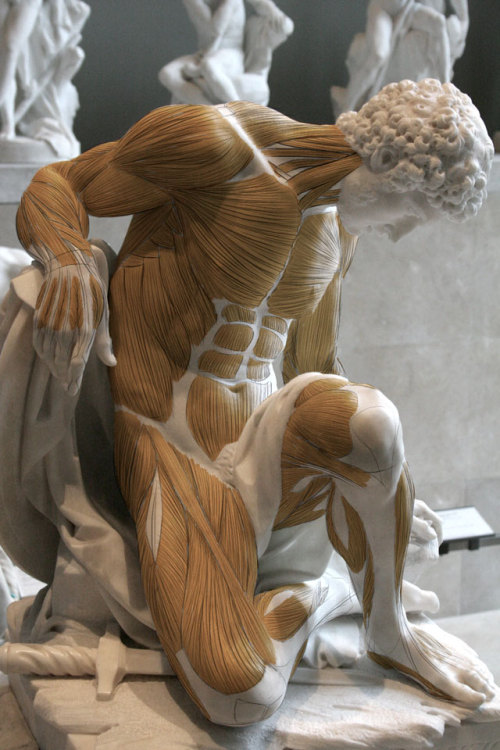 womanonfire:  (via bragino.com » Anatomy for Artists with Scott Eaton)