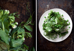 Recipe for Sesame Pea-Shoot Salad over on Westervin!