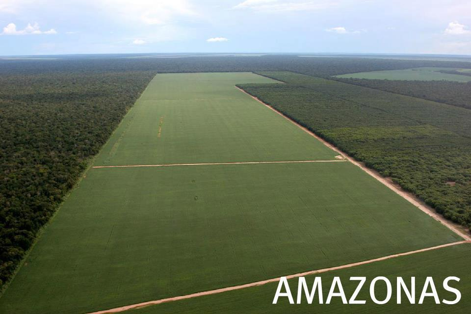 Amazon Deforestation, for soybeans, to feed animals, to fulfill meat industry demand.