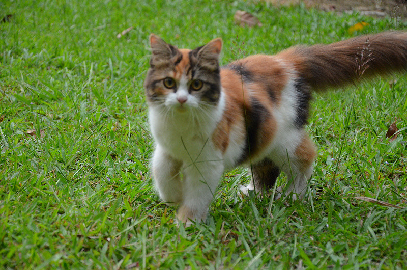 cybergata:  Miyu and grass by Siti Rohil Buran on flickr