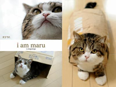 Maru the Cat has a book