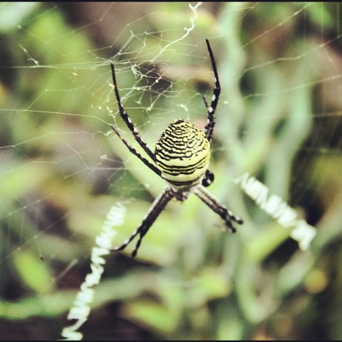 Arachnid. #instaphoto #forest #insect (Taken with instagram)