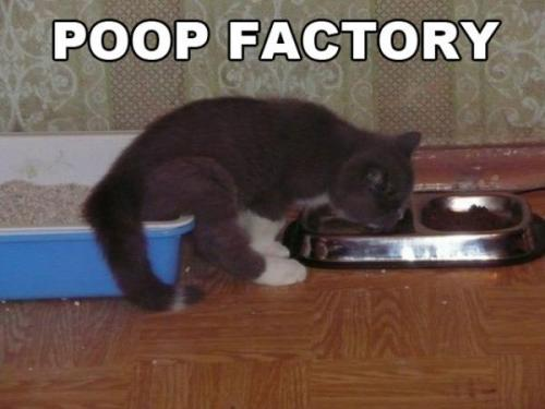 poop factory »follow us for more«