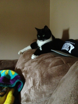 Sinister Cat steals your snapback…
