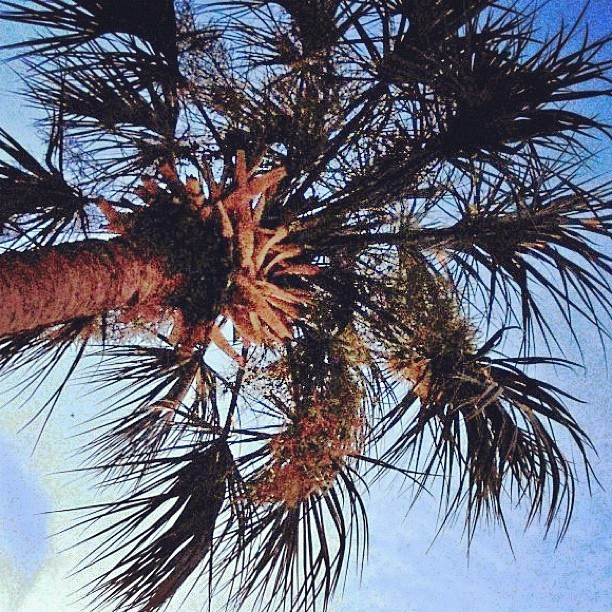 Love #summer #palmtrees #paradise #sunset #instagood (Taken with instagram)