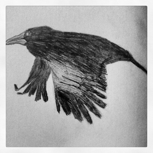 Crow (Taken with instagram)