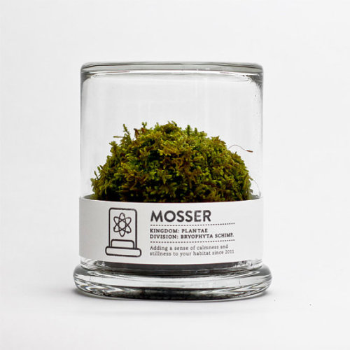 Mosser Glass Terrarium NY based designers Jennica Johnstone and Noah Atkinson create these small glass terrarium filled with a simple round moss ball.  Mosser is for sale on Etsy for $26.