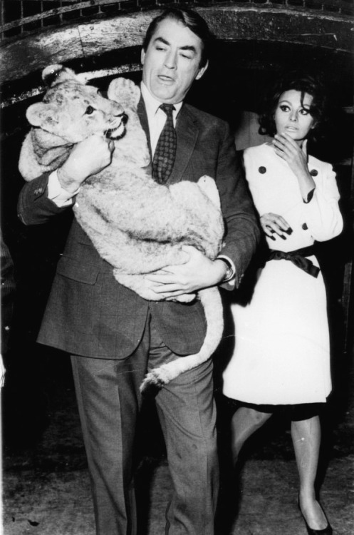 Gregory Peck, sophia Loren and a baby lion in 1966.
