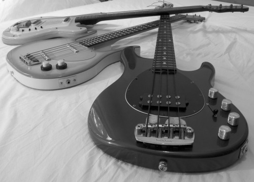 "Futurama, Danelectro and Musicman Basses. Following on from Chris Thomas' previous ""Guitars on a bed"" photo, comes the latest in the series - ""Basses on a bed"". From top to bottom, we have a Futurama short scale bass (previously owned by Gerry Taylor, Bassist for Stealers Wheel), a Danelectro Long Horn Bass and a Musicman Sterling. Yes, the song is correct; some guys really do have all the luck."