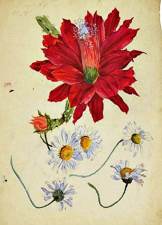 Sebastien Weymar Five Daisies and a Red Dahlia Late 18th - early 19th century