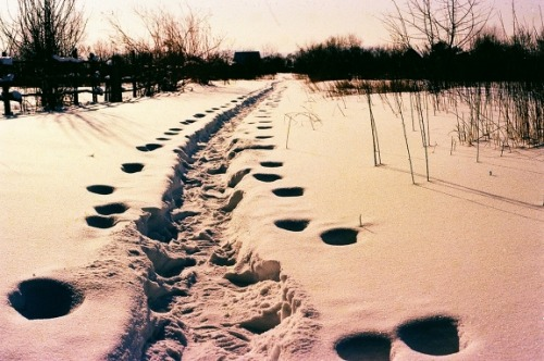 (By 129 on Lomography) …