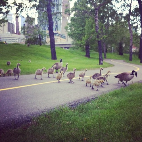 Animal Crossing #yycbike #yyc (Taken with instagram)