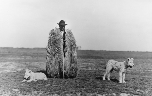 Sheperd with his dogs, 1930s + Rudolf Balogh  (firsttimeuser)