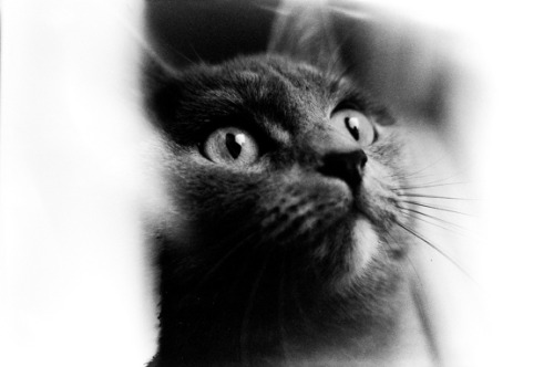 My cat Anfisa…  with wonderful eyes… (By bird_of_hope on Lomography) …