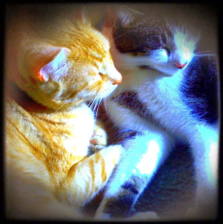 Two Kitties#cat #streamzoo #photography #sznuts #CapturedMoment(from @christinefeld on Streamzoo)