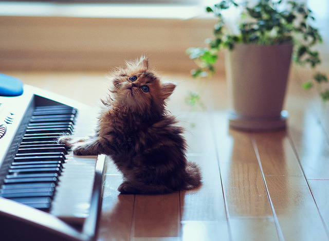 Play It Again, Daisy by torode on Flickr.