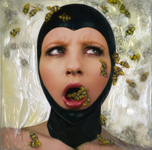 Honey Bees - Karen Hsiao