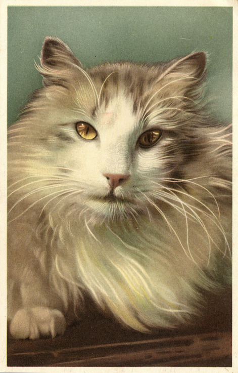 Long-haired kitty postcard (by the ghost of me)