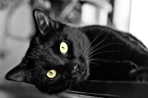 llbwwb:  Black Cat says,Hello Beautiful Friends :) (by Donal James Boyd)