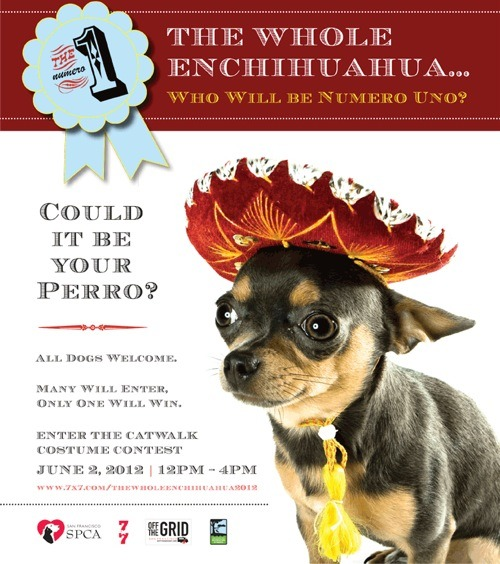 Hey Bay Area chihuahua-owners and admirers! Get to Dolores Park on Saturday, June 2, for an awareness event all about your favorite tiny dog! The SF SPCA and 7x7 magazine are hosting The Whole Enchihuahua, a fun-times outdoor event for you and your titchy canine! There'll be a costume contest (exclusively for dogs who enjoy dressing up), food trucks, a prize wheel, a mariachi band, a vet to answer your burning (not literally) (we hope) pet-health questions, and an adoption event! You could meet the chihuahua of your dreams—or some other animal, they're flexible. Check out the details at 7x7, including the giant prize package for the costume contest winner. Whether you love those little buggers up close or from afar, this is the event for you.
