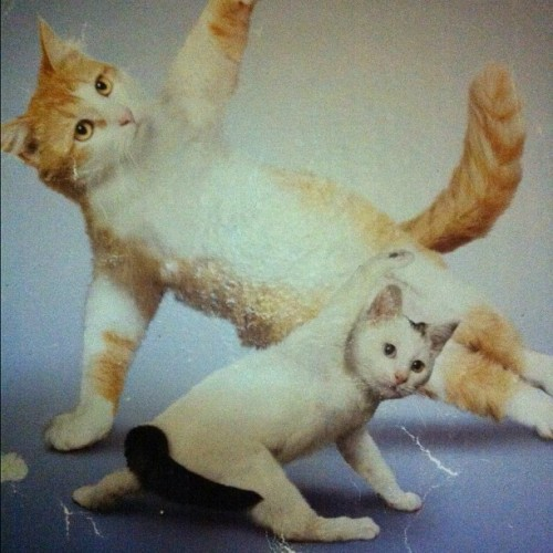 This picture wins the Internet. #cats #yoga #reddit #animals (Taken with instagram)
