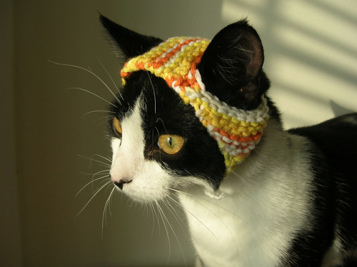 I want one for my cat!
