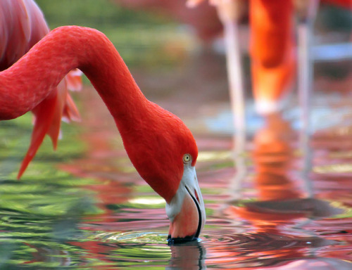 sun-stones:  Flamingo Flair by ozoni11 on Flickr.