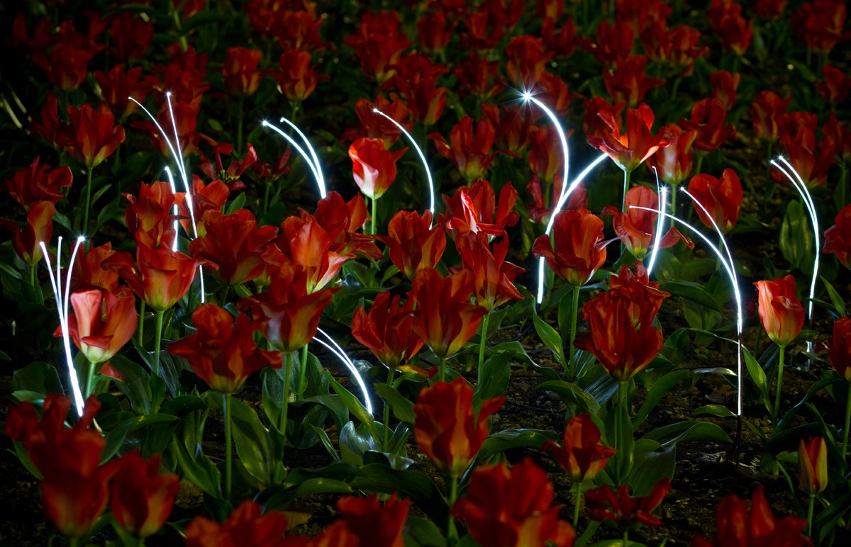 Growing Lights by gorilla lighting for the Luminale 2012.