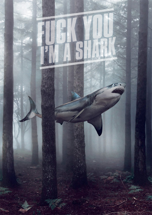 teamrocketexec:  Sharks know whassup.