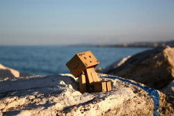Danbo Enjoying the Sunshine
