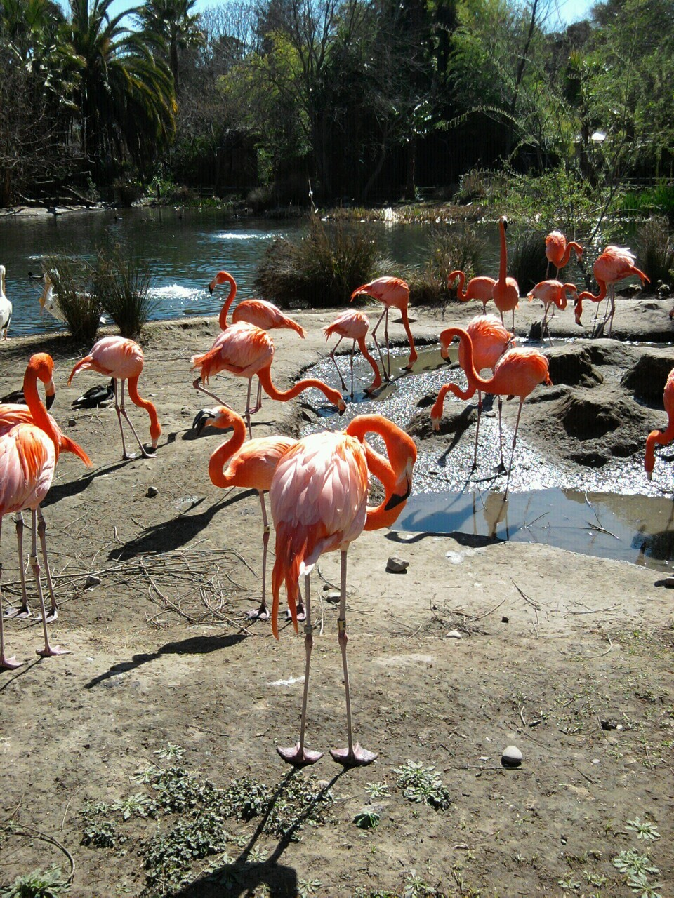 Hold my hand and watch the flamingos