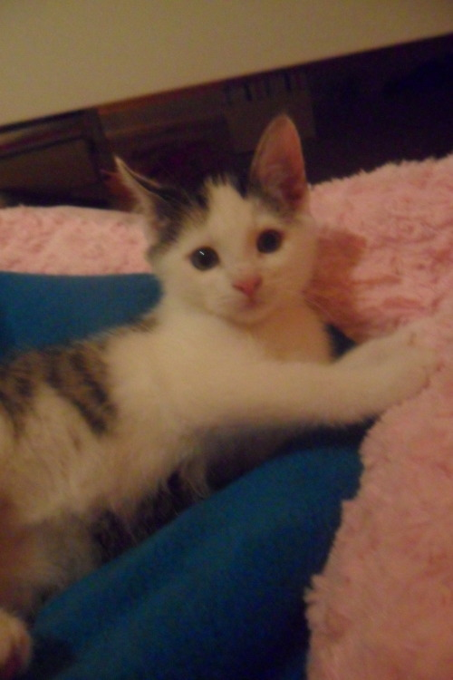 "Please vote for my kitten Noah! He want´s to win a kitty house so much! ♥♥:http://foto.whiskas.de/GalleryDetails.aspx?id=E5D30E6AB8D58FFD98B36C70C9379AE0&orderby=&page=&search=Noah It´s very easy. Please click ""Meine Stimme für diese Whiskatze"" on the right.Thank you so much! ♥♥♥"