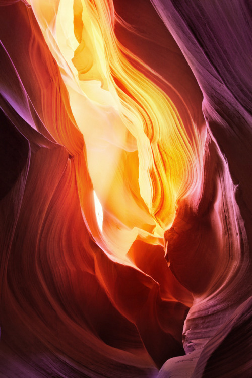 humanflower:  The flame by Long Nguyen