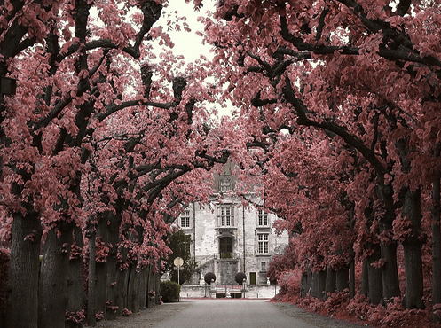 Through the cherry blossoms and into the manor…