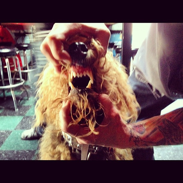 #punk #dog smiles for #internationalpervert  (Taken with Instagram at Lucky 13)